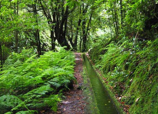 Levada do Rei - What is a Levada